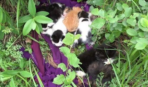 Vicdansızlar kedileri ölüme terketti!