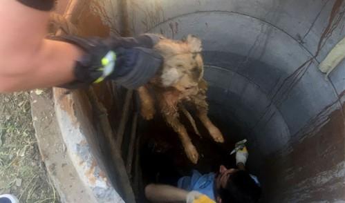 Eyüp Belediyesi ekipleri yavru köpeğin yardımına yetişti