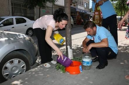 Eyüpsultan Belediyesinden hayvanseverlere birlikte çalışma çağrısı