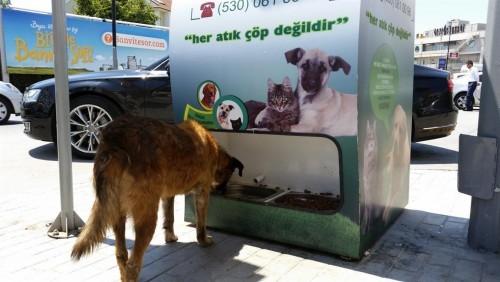 Sokak Hayvanları İle İlgili Sorular ve Cevaplar