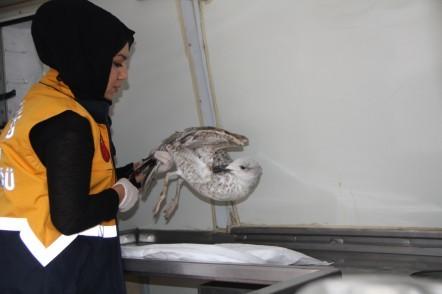 Yaralı martı veteriner ekiplerince tedaviye alındı