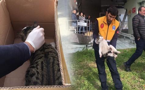 Veteriner Ekiplerimiz kedinin imdadına yetişti
