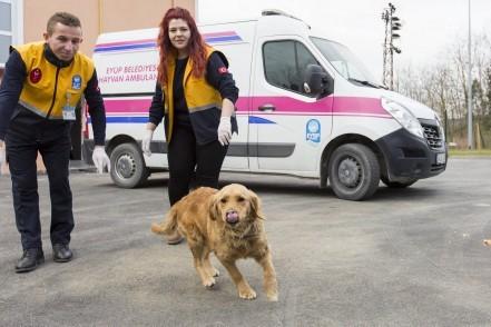 Eyüpsultan Belediyesi, Kemerburgaz Sokak Hayvanları Kliniği