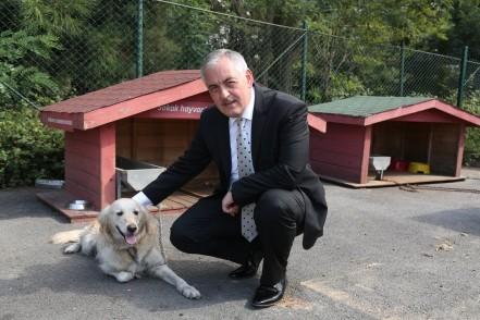 Eyüpsultan Belediye Başkanı Remzi Aydın, sokak hayvanları