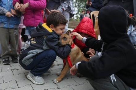 sokak hayvanları, Eyüpsultan Belediyesi, Eyüpsultan Belediye Başkanı Remzi Aydın