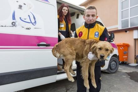 Sokak hayvanları, Kemerburgaz Sokak Hayvanları Kliniği, Eyüpsultan Belediyesi
