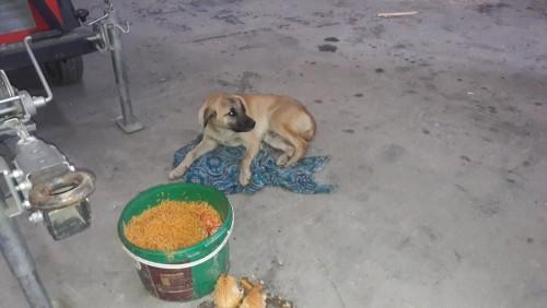 Eyüpsultan Belediyesi Veterinerlik Müdürlüğü, köpek, tedavi, Akpınar mahallesi