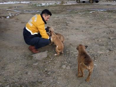 Eyüpsultan Belediye Başkanı Remzi Aydın, Eyüpsultan, Sokak Hayvanları Eyüpsultan'da Yalnız Değil