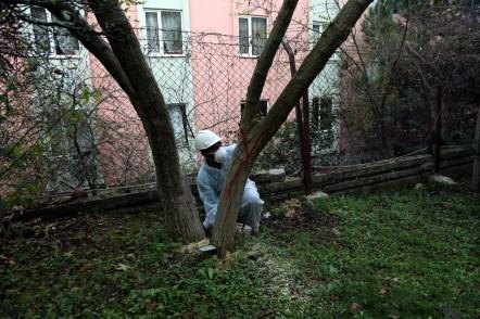 Turunçgil uzun antenli böcek, mücadele, Eyüpsultan Belediyesi Park Bahçeler Müdürlüğü