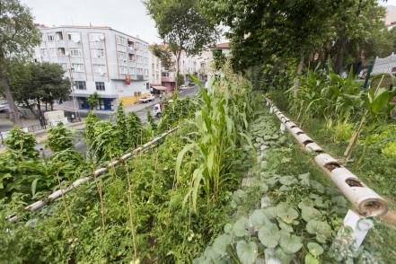 """Eyüpsultan Belediyesi, """"Doğa ile Tasarım"""" Kursu Başlatıyor"""