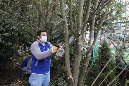 Eyüpsultan'da Ağaç Budama Çalışmaları Devam Ediyor