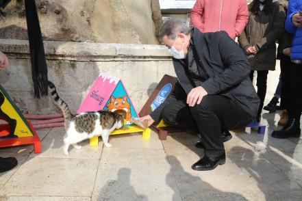 """Eyüpsultan'da """"Dünya Kediler Günü"""" duyarlılığı"""