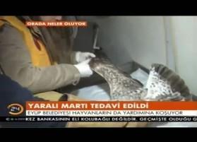 Kanal24 - Yaralı Martı Tedavi Edildi